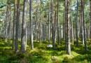 Meža Programma Latvijas sabiedrībai – 2017.gada 25.augusta semināra plāns