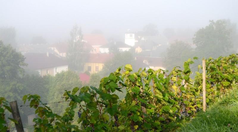 Sabiles Vīna kalns miglā no rīta 30. augustā (3)