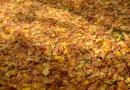 Uzaicinājums uz rudens lapu vākšanas akciju