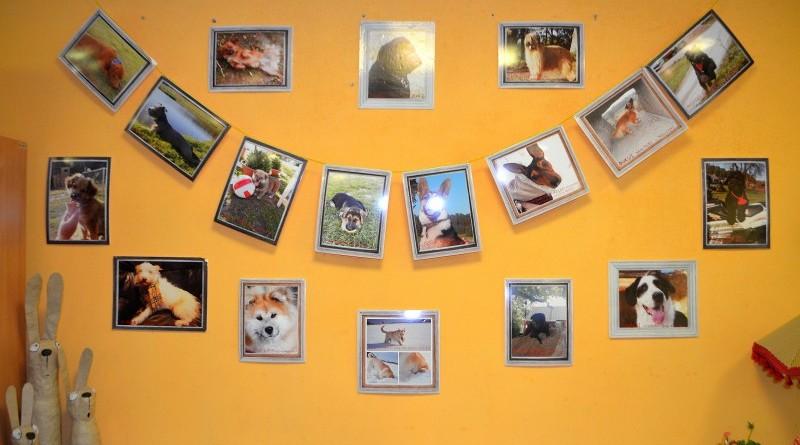 Sabiles suņu fotogrāfiju izstāde (1)