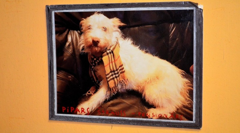 Sabiles suņu fotogrāfiju izstāde (2)