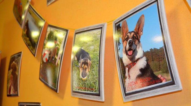 Sabiles suņu fotogrāfiju izstāde (3)