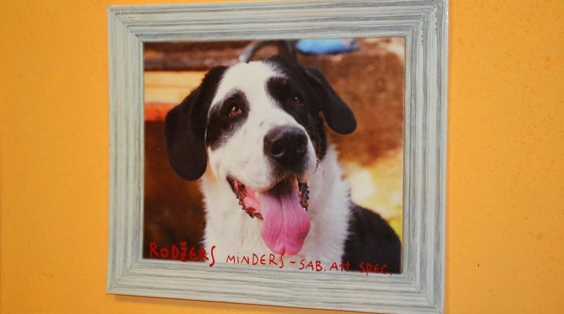 Sabiles suņu fotogrāfiju izstāde (4)
