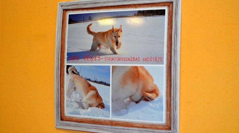 Sabiles suņu fotogrāfiju izstāde (5)