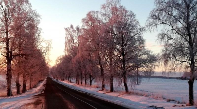 Sabiles - Stendes ceļš saullēktā_2019_22 janvāris (2)