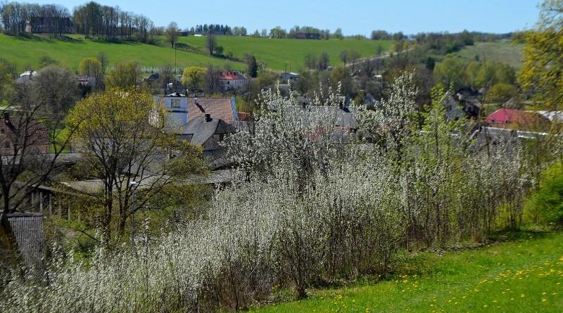Sabile_pavasaris
