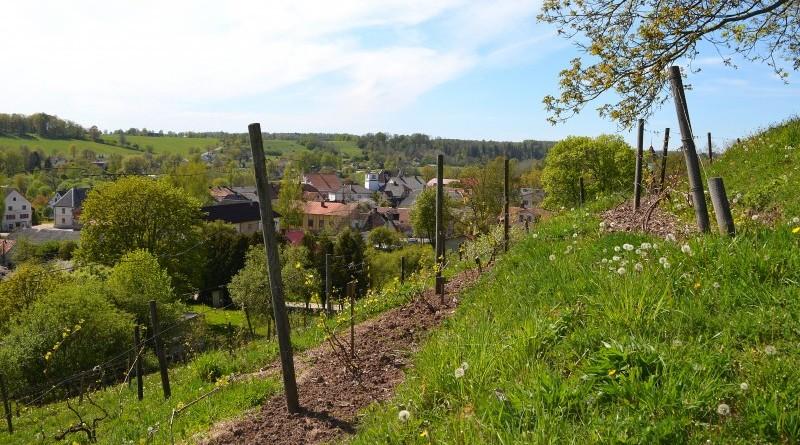 Sabile_Vīna kalns_2019_15 maijs (9)