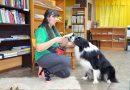 Sabiles bērnu bibliotēkā 12. februārī lasīšana kopā ar terapijas suni Basso
