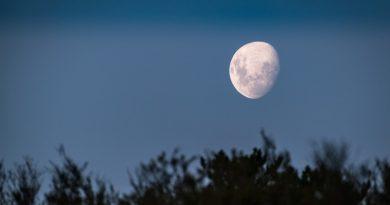 """Video par sabilnieku Ēriku Kleinu un viņa grāmatu """"Mēnesgaismas stāsti"""""""